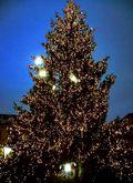 Bratislava Tree